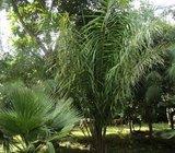 4 acres of Prime Arable Land in Sikhendu Naitiri Svheme