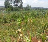 Prime land for sale at Muguga Limuru.