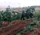5 Acres: Machakos: Mua Hills