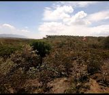 40 acres on sale in ngong kimuka