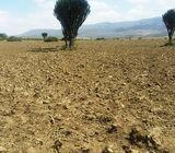 5 Acres Moi Ndabi Naivasha