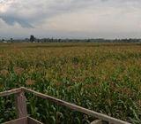 100 Acres Kitale (Red Soil)