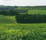 20 Acres Tea Farm Nandi ( Cheptiret)
