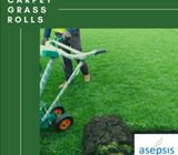 Grass Rolls at Asepsis Limited Stores