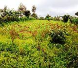1.75 Acres Komothai : Githunguri