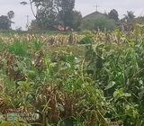 Kikuyu prime 1.06 acre plot for sale