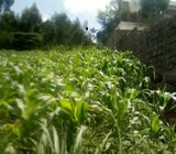 Prime  5- Acres agricultural Land in Njoro /Naishi  on Quick SALE